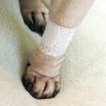 pawflex basic pet bandages, pawflex, pet shop near me, dog bandages, paw bandages, animal heatlh, pet store