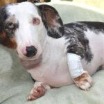 pet bandages, pawflex pet bandages, pet supply, pet care