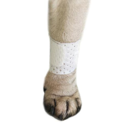 PawFlex | Basic Dog Bandage