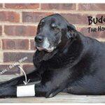 bandages for dog, pet bandages, pawflex, pet care, animal health, paw bandages