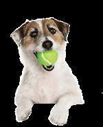 Dog and Ball