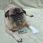 First Response Paw Bandage for pet, dog bandages, pet bandage, pawflex, pet care, animal care, pet shop near me, dog care, french bulldog