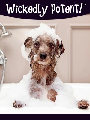 PawFlex | Wickedly Potent, Natural Remedies, Fleas and Ticks Dog Shampoo