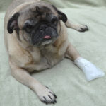 MediMitt Outdoor cover, pet bandages, dog bandages, pawflex