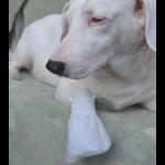 MediMitt Outdoor cover, pet bandages, dog bandages, pawflex, pet shop, pet care, bandage for animal