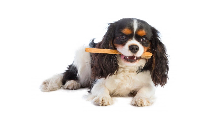 Wickedly Potent, Dog Toothpastes, Natural Remedies