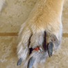 injury dog, dog bandages, pet bandages, animal health
