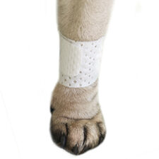 Pawflex Basic Dog Bandages, pet bandages, pet shop, pet store near me, pawflex