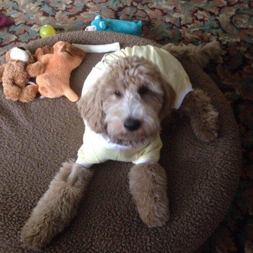 Bentley playing