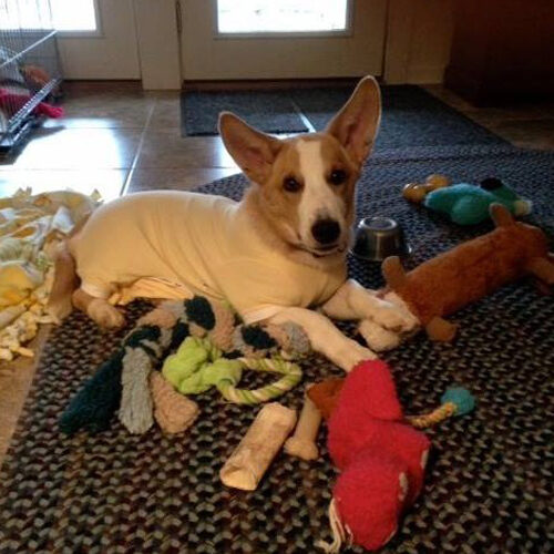 Copper with Toys