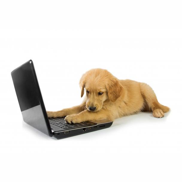 pawflex customer services puppy
