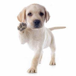 customer services puppy