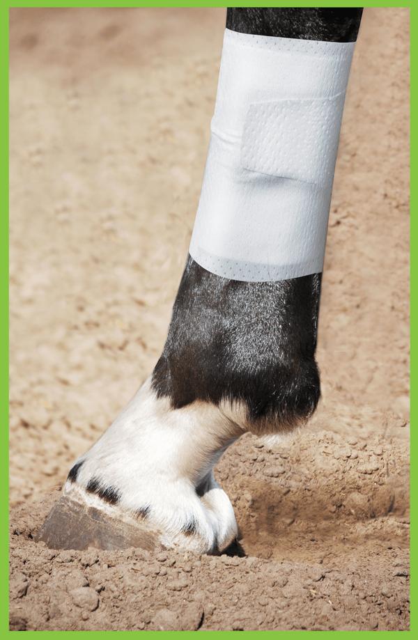 Equine BandaFlex | Medium