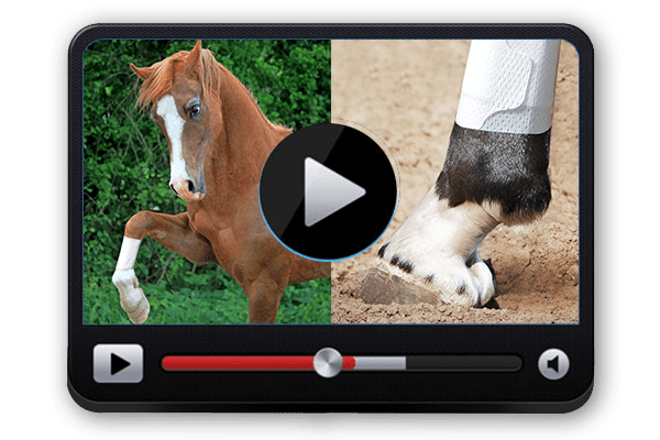 Equine BandaFlex Video Rewards Program