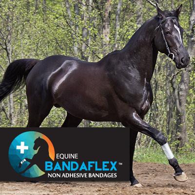 Equine BandaFlex, Horse Bandages