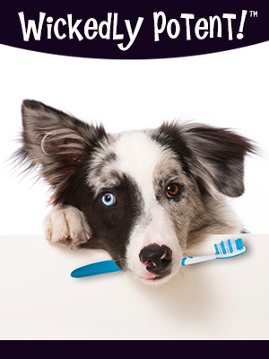PawFlex | Wickedly Potent, Natural Remedies, Vegan Tropical Dog & Pet Toothpaste, side banner