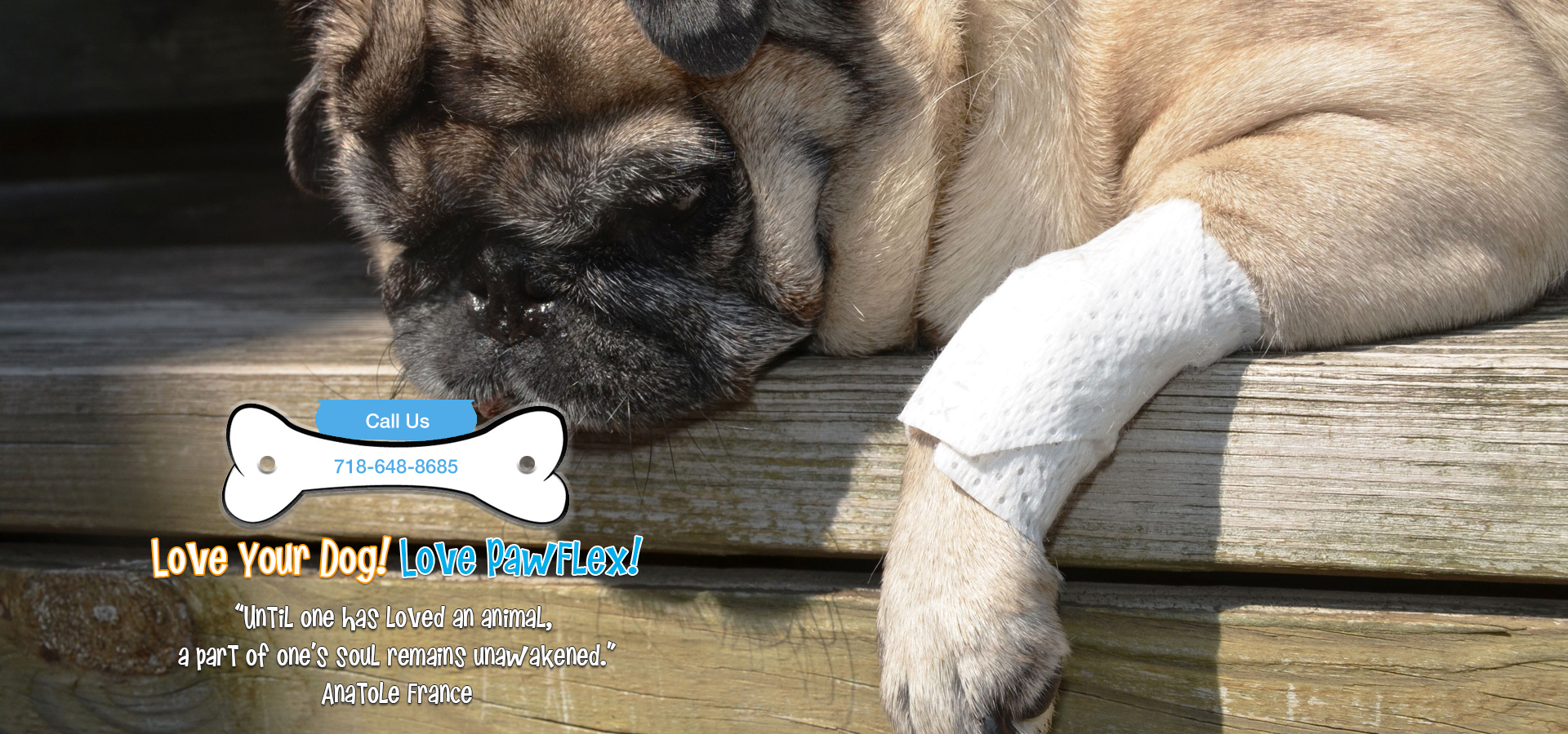 PawFlex, Paw Bandages for pets, Home Banner