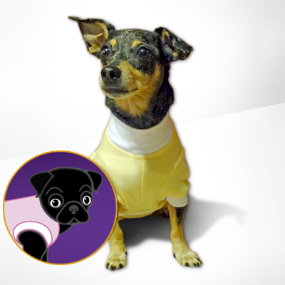 Medical Onesies for Dogs and Pets