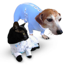 Cats and Dachshund, Medical Onesies, onesies for animal, pawflex, pet supply, pet bandages, dog bandages