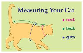 Medical Onesies, measuring your cat, pawflex, pet and dog bandages, pet shop near me, Medical Onesies