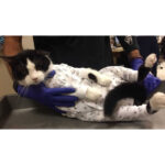 cat onesies, Cat Medical Onesies, pawflex, pet store, pet supply, paw bandages for dog