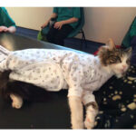 Cats Onesies, pawflex, onsies for animal, onesies for cats, paw bandages, pet supply, pet shop near me