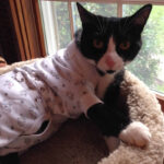 Cats and Dachshund Onesies, cat onesies, pawflex, pet store near me, pet bandages, pet onesies, paw bandages